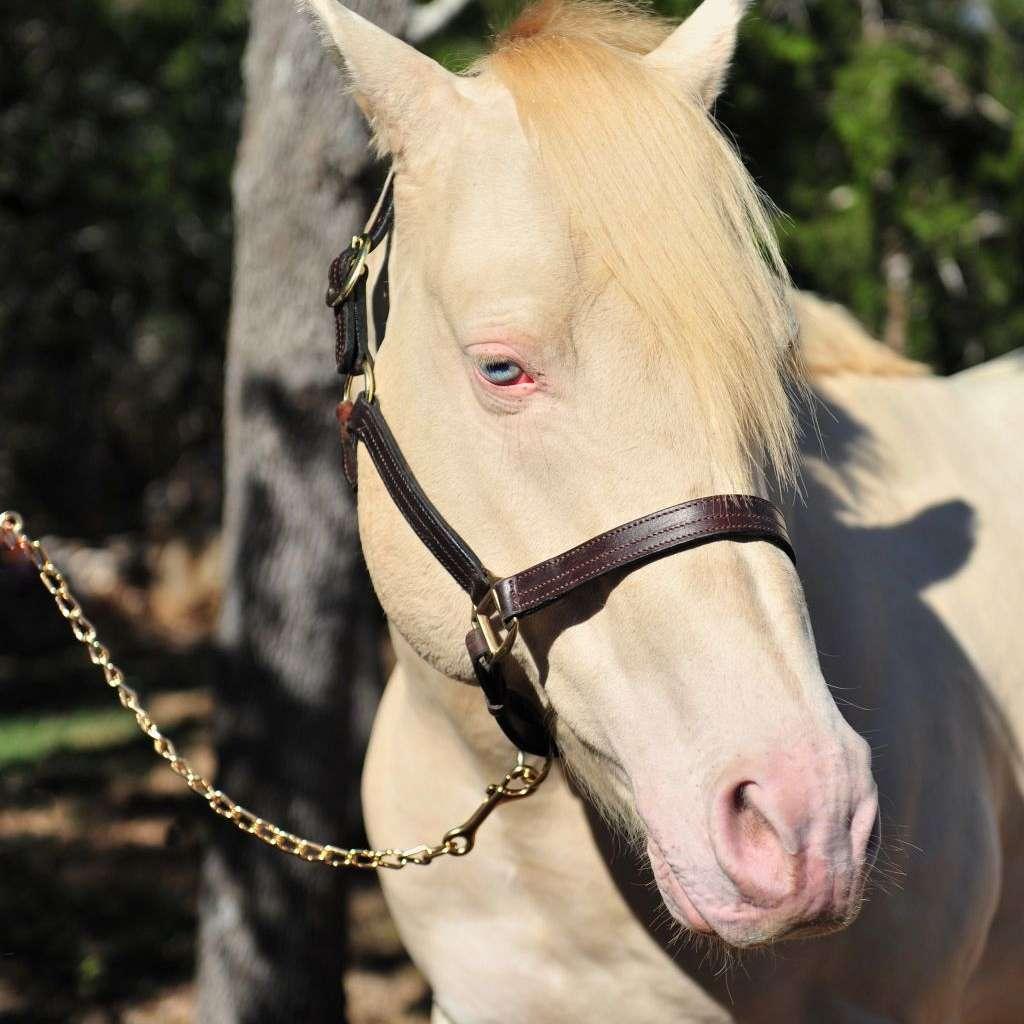 Circle M Quarter Horses