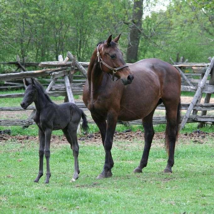 Merrickville Equine