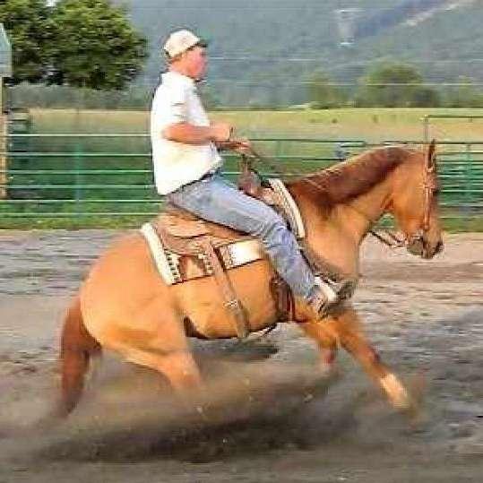 Rockin G Performance Horses