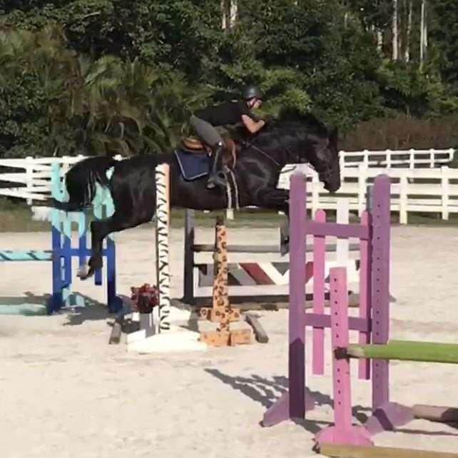 Silver Lining Equestrian