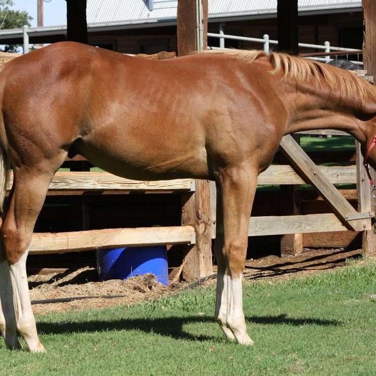 Hughes Quarter Horses