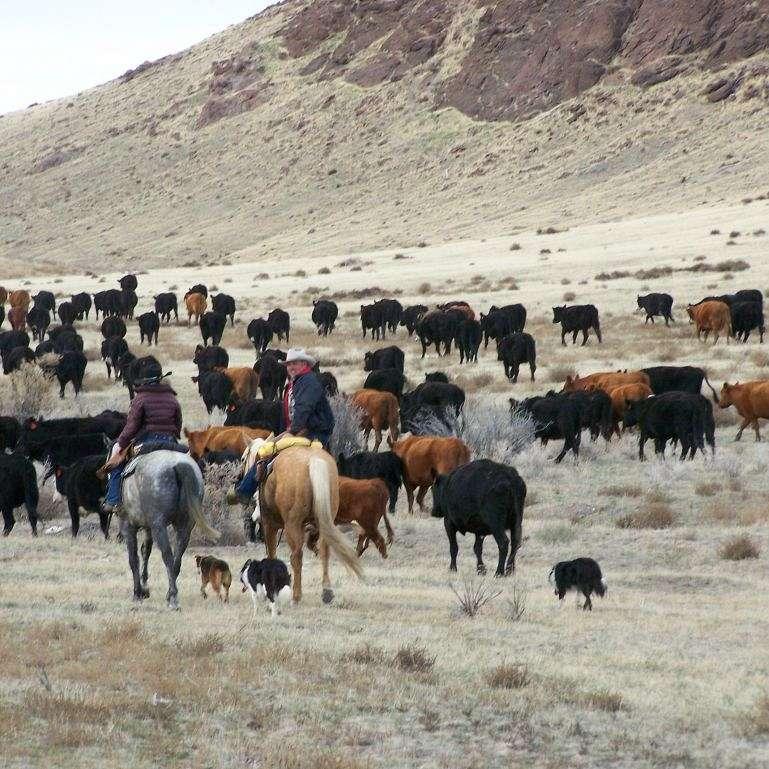 Blackstock Ranch