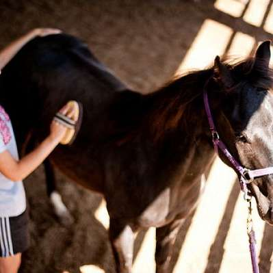 Luce Reins Training- Traveling Horse Training