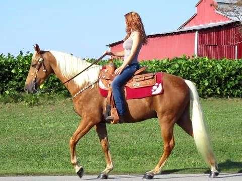 Tennessee Walking Horses For Sale