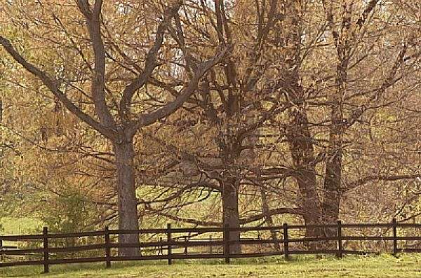 Oak Crest Farm On Equinenow