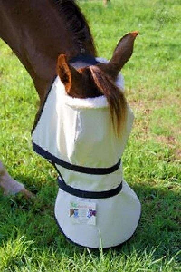 Nag Horse Ranch On Equinenow