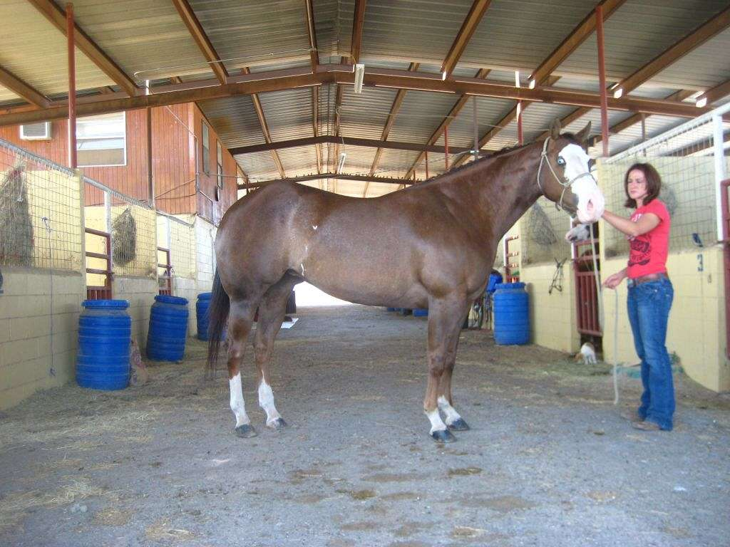 Reparo Ranch Stables On EquineNow