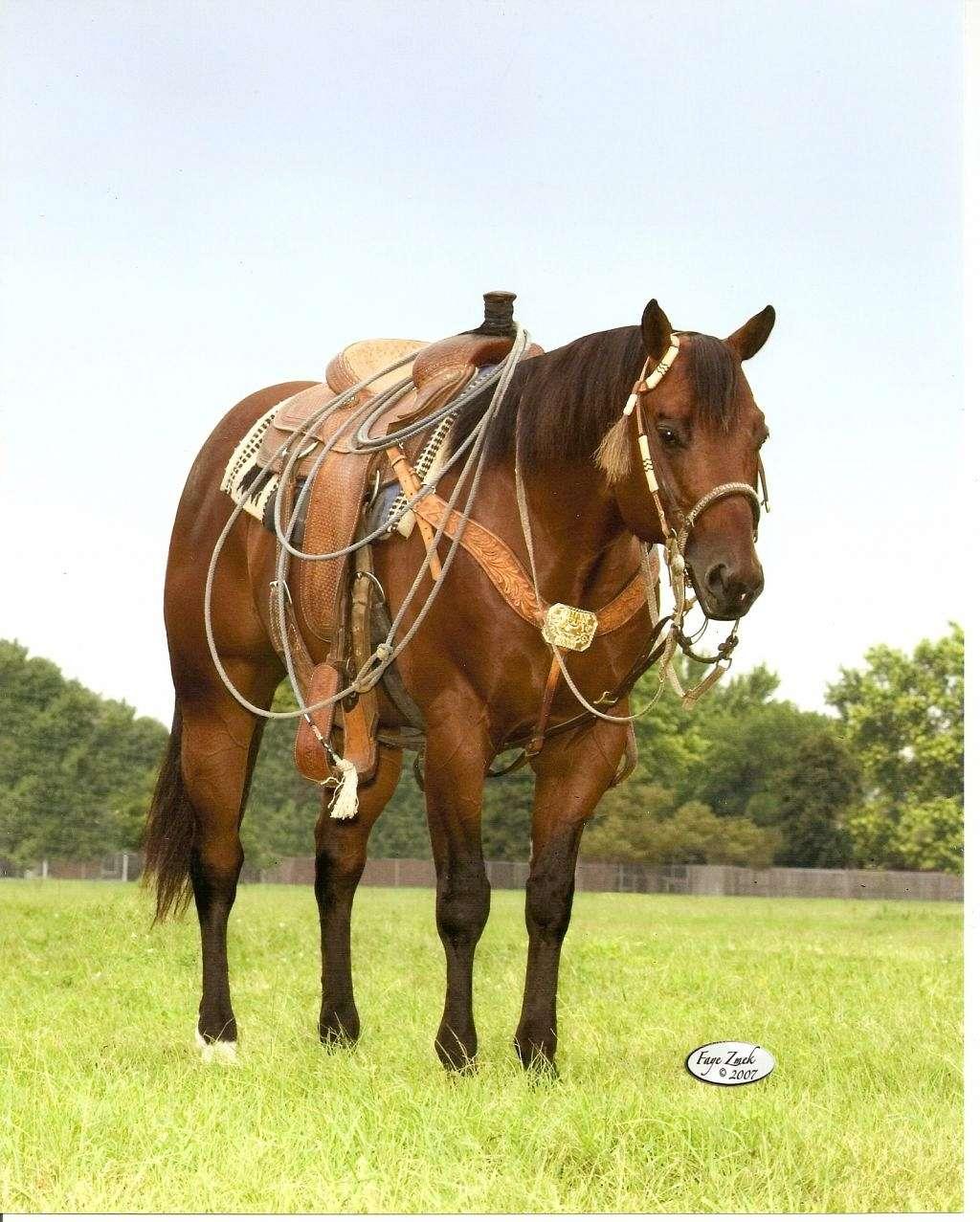 Jeffres Quarter Horses On Equinenow