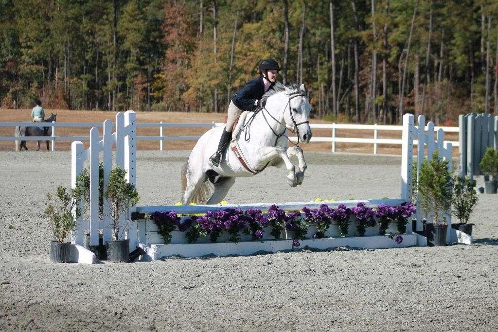 Tally Ho Equestrian Center Llc On Equinenow