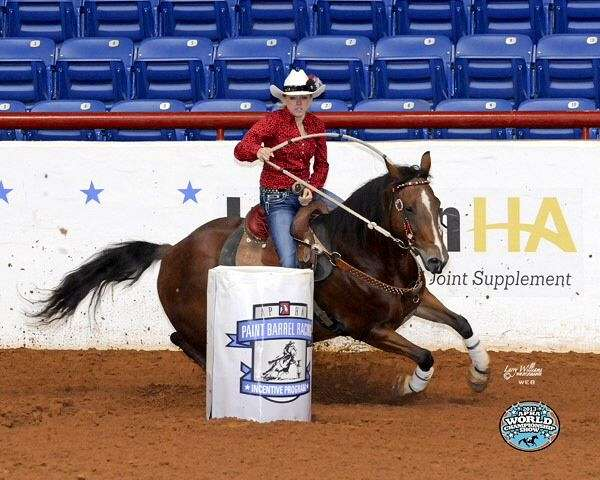 Reining Horses - The Best Horse Of 2018