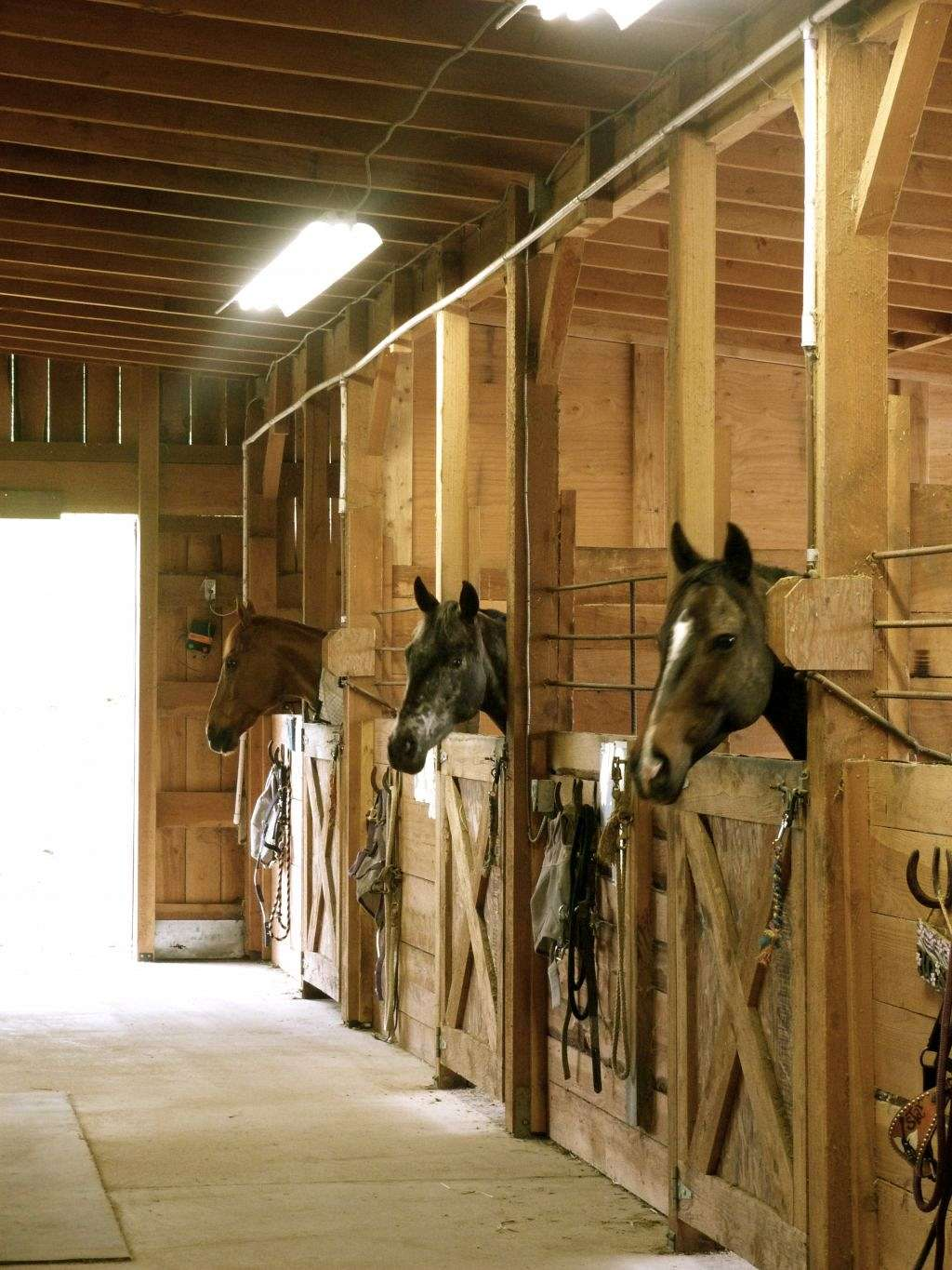Anderson Snowy Mountain Stables On Equinenow