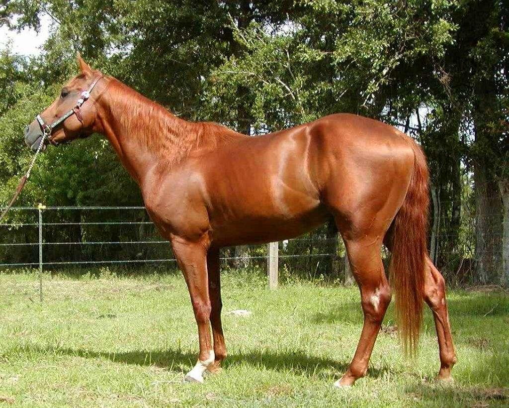lang s quarter horses on equinenow lang s quarter horses
