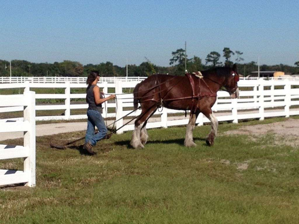 Diamond P Equestrian Center Llc On Equinenow