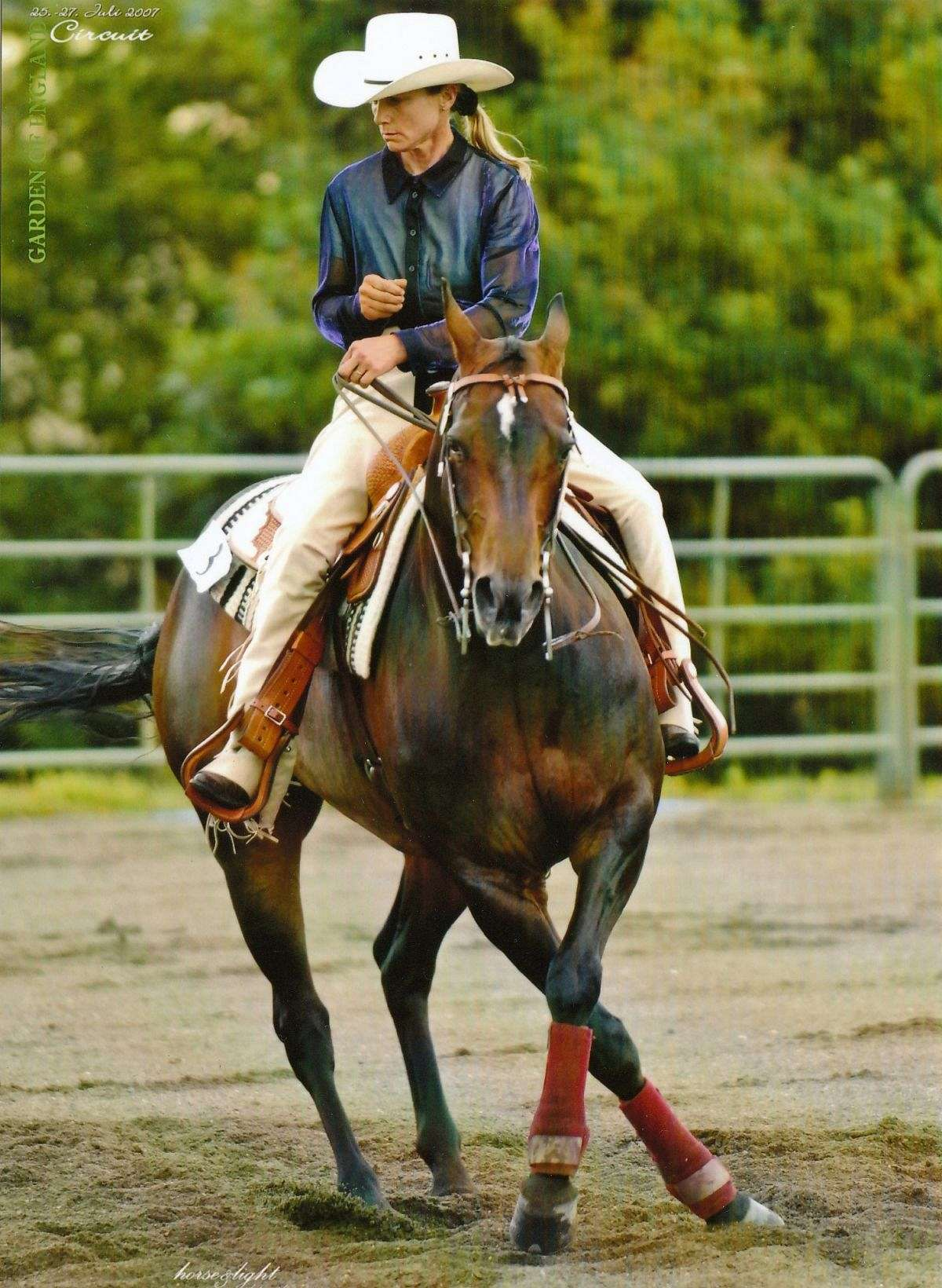 Western Performance Horses On Equinenow