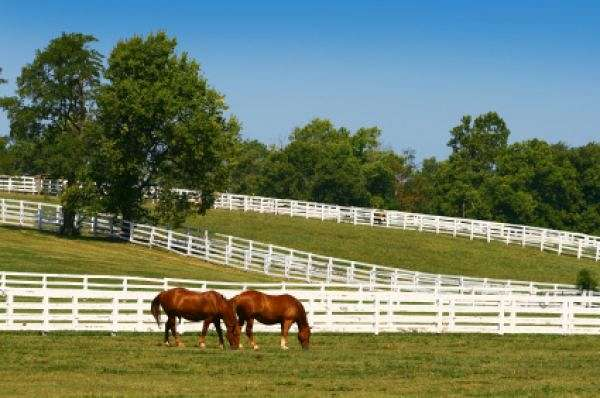Michigan Horse Farms On Equinenow
