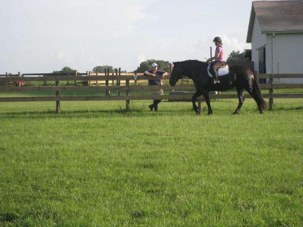 Meadow Run Farm On Equinenow