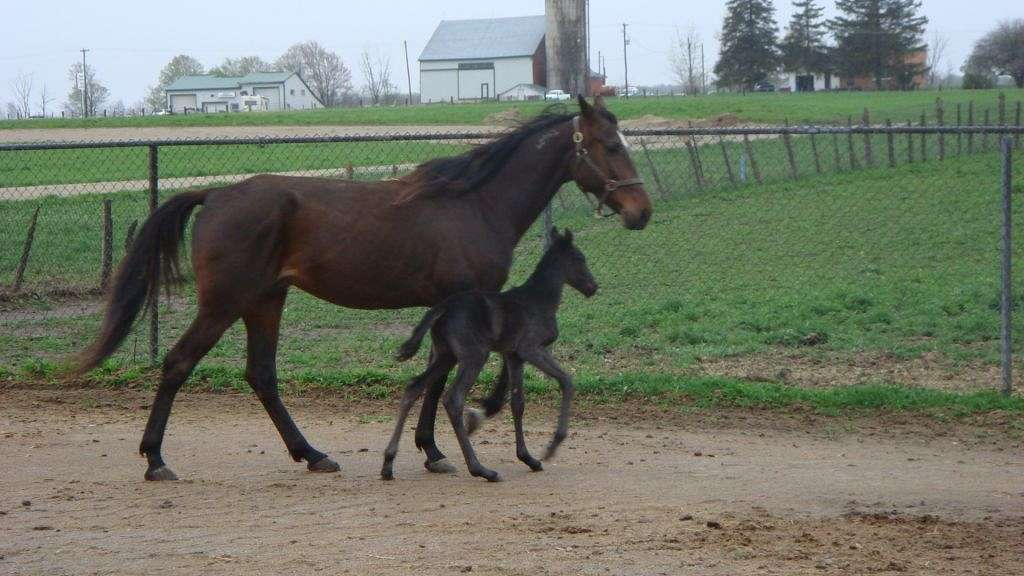 A Place For Standardbreds On Equinenow