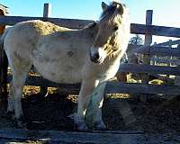 stands-fjord-horse