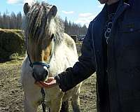 years-fjord-horse