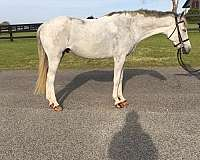 personality-welsh-pony