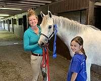 welsh-pony-gelding