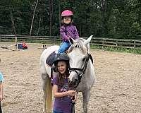 beginner-novice-welsh-pony