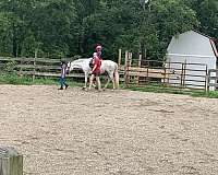 eventing-pony-welsh