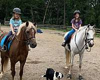 rail-welsh-pony