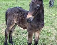 trail-ride-pony