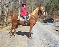 trail-horse-for-sale-in-va-racking