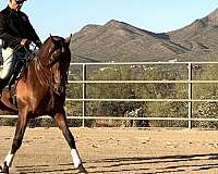 trick-trained-andalusian-horse