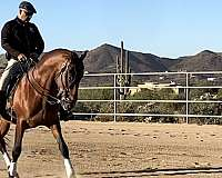 learn-andalusian-horse