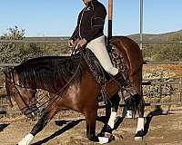 acts-like-a-gelding-andalusian-horse