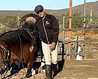 loves-to-go-andalusian-horse