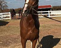promising-filly