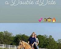 young-mare-palomino-horse