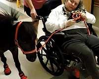 trained-miniature-horse