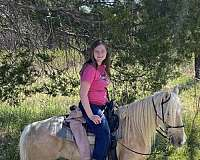 palomino-mare-for-sale