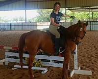 leg-pressure-half-arabian-horse