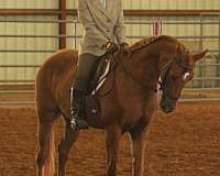 bone-half-arabian-horse