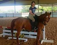 eyes-half-arabian-horse
