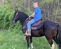 trail-spotted-saddle-pony