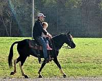 trained-spotted-saddle-pony