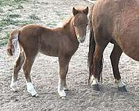 young-colt-weanling