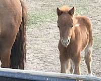 tennessee-colt-weanling