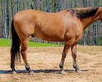 barrel-racing-quarter-horse