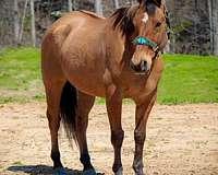 experienced-quarter-horse