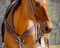 flashy-quarter-horse