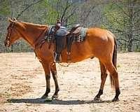 husband-safe-quarter-horse