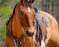 performance-quarter-horse